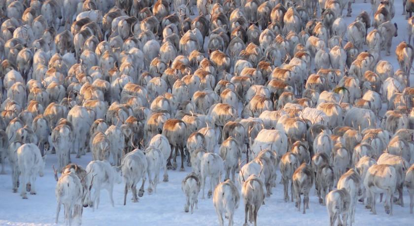 reisboek Sámi rendiertrek