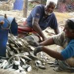 visvangst, Mannar, Sri Lanka